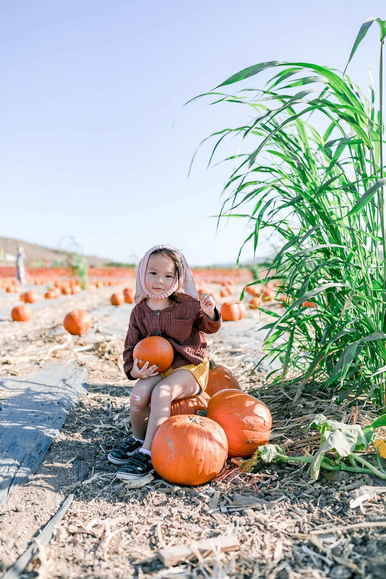 Fall Is Here! But, Is It Safe to Go Pumpkin Picking This Year?